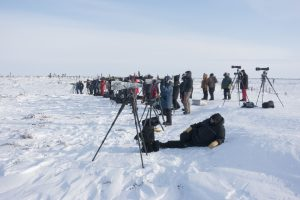 People viewing from afar with cameras and lenses watching polar bears