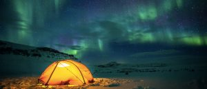 watchee expeditions polar bears